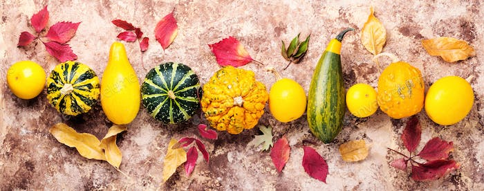 Assortment of decorative pumpkins