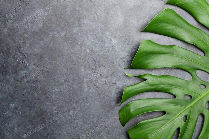 Steinhintergrund mit grünem Pflanzenblatt
