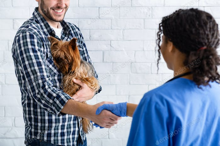 Happy client holding little dog and shaking hands with veterinary doctor in animal clinic