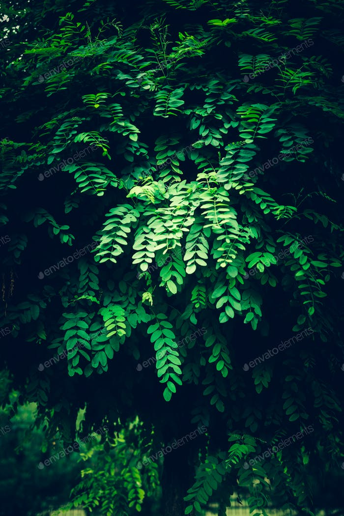 Lush foliage in a dark lighting.