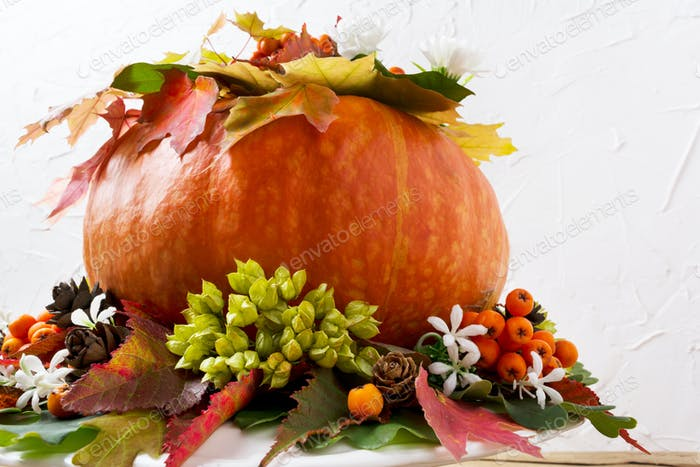 Fall decoration with pumpkin and white flowers