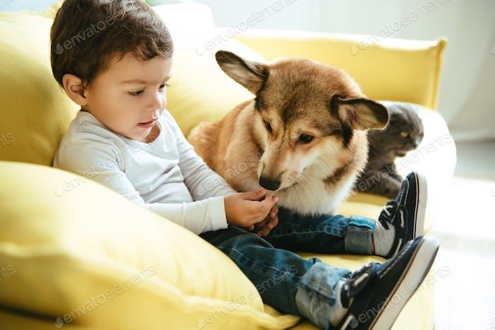 Adorable niño sentado en el sofá con gato y perro