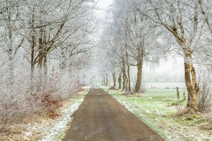 Frozen frisian winter road