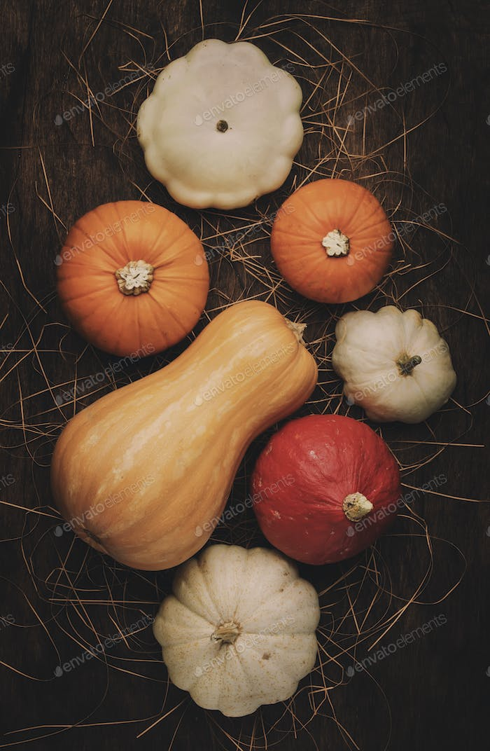 Set of colorful pumpkins on wood flat lay empty space