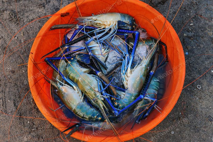 Tray with fresh indian blue Scambi in a fishermen market in Cochin, India