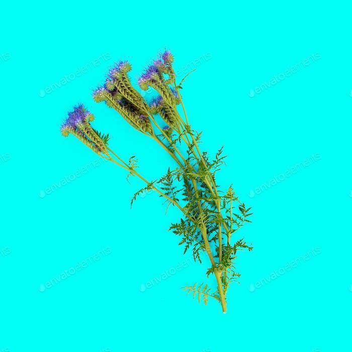 Wild flower on blue background. minimal style