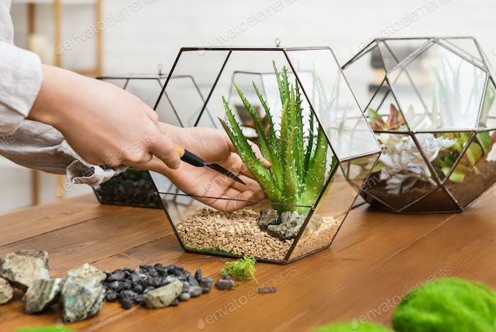 Woman making mini garden. Home gardening hobby concept
