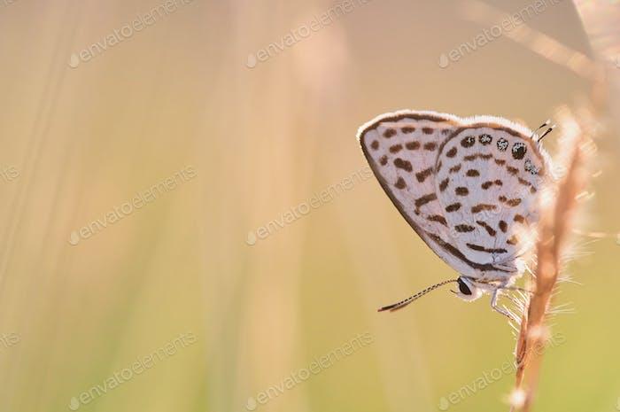 Butterfly perching on a grass stem