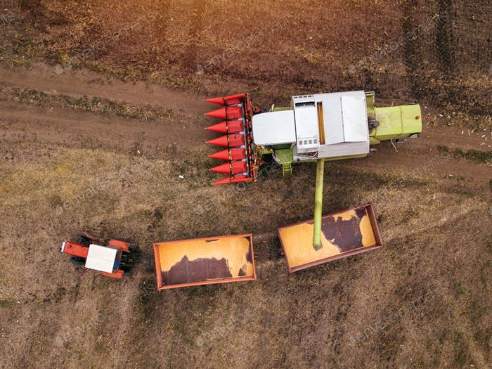 Aerial view of combine pouring harvested corn grains into traile