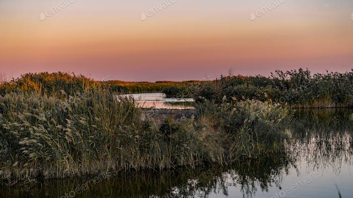 Danube Delta Vegetation