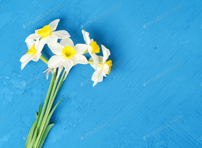 Bouquet of fresh flowers daffodils in blue textured background. Empty space, mock up, top view.