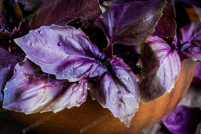 beam of purple basil in the bowl closeup