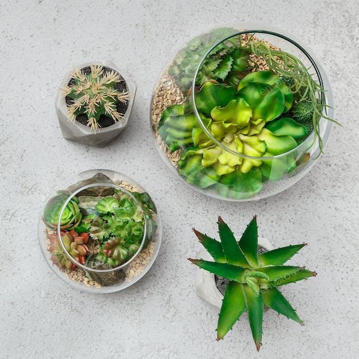 Home plants composition