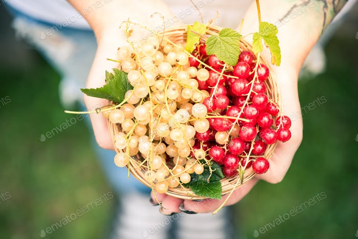 Young female holding freshly picked homegrown fruits