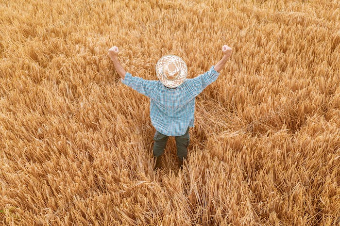 Proud happy victorious barley farmer with hands raised in V