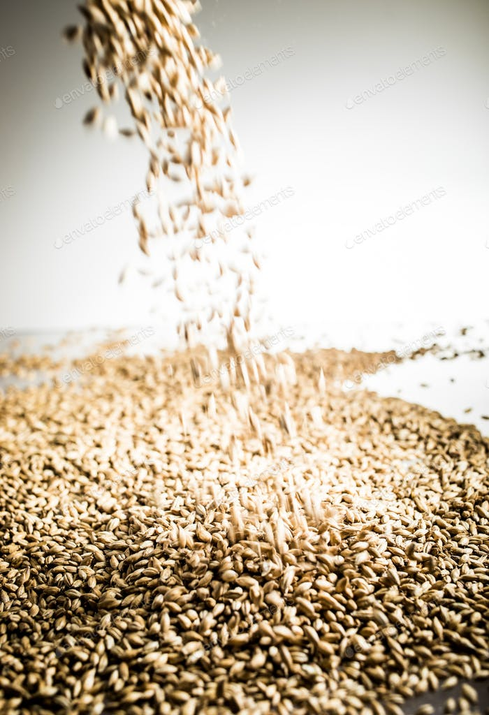 Falling Pilsner Malt Beer Grain Heap on a White Table