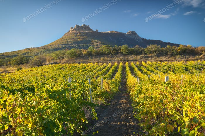 Mountain and Vineyard.