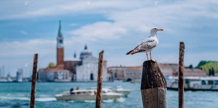 Scenic view of blurred Venice panorama of Venice's embankment with seagull in front. Most