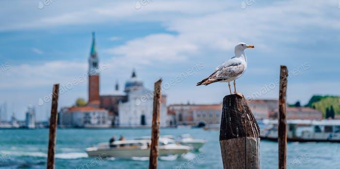 Scenic view of verschwommenes Venedig Panorama von Venedigs Böschung mit Möwe vor. Die meisten