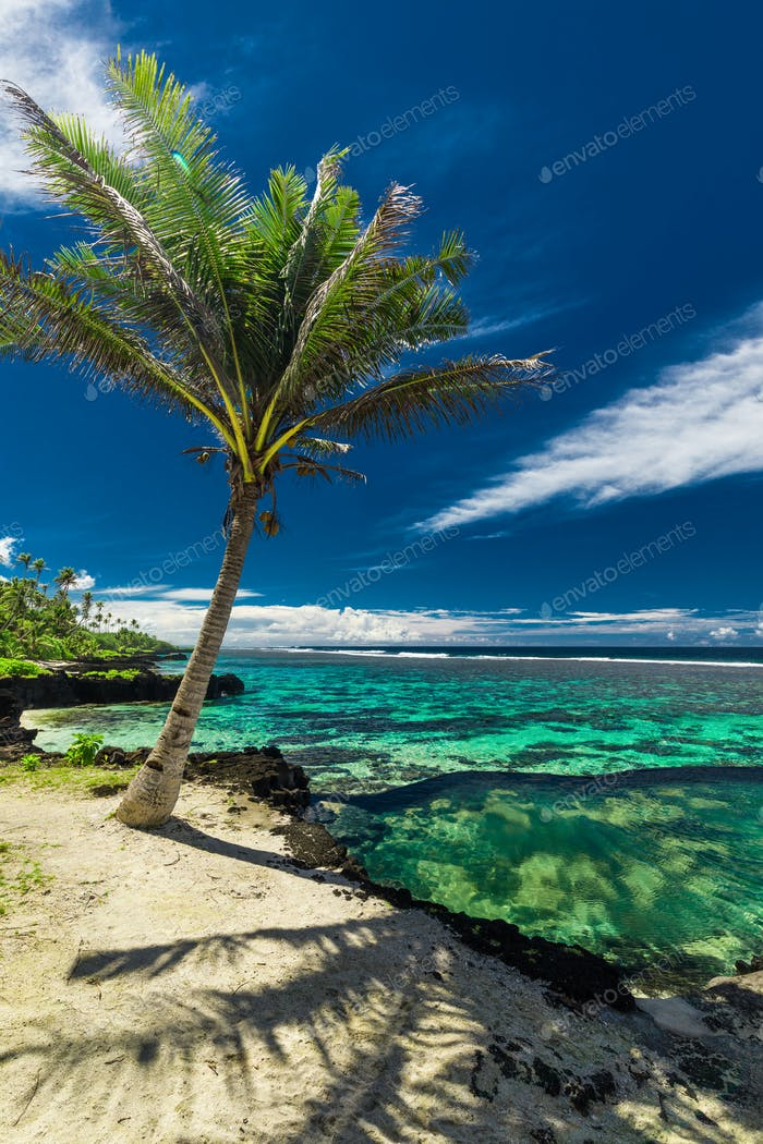 Natural infinity rock pool with palm trees over tropical ocean l
