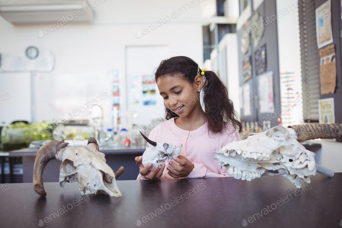 Elementary student holding animal skull by desk