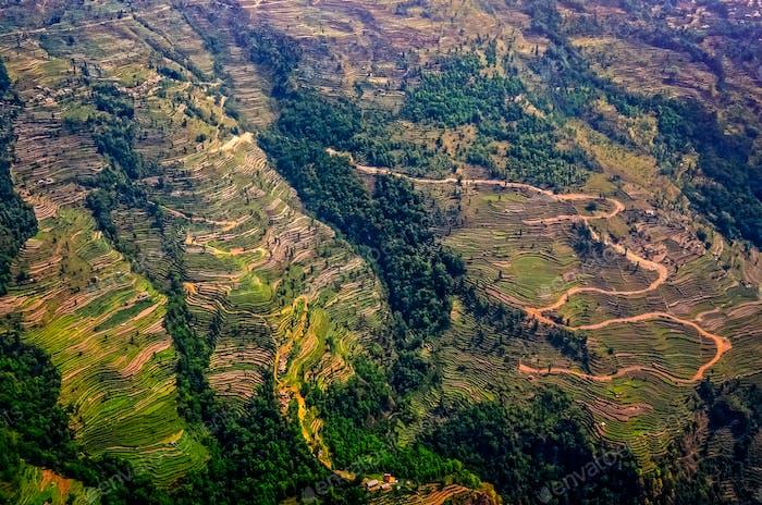 Luftaufnahme von grünen und bunten Reisfeldern und Terrassen