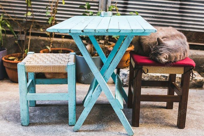 Cozy scene - cat sleeping on cafe chair outdoor