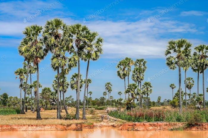Rural tropical landscape