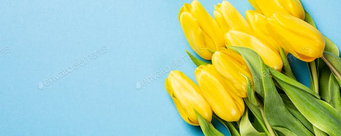 Yellow tulips background