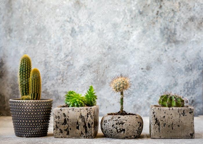 Sammlung von verschiedenen Kakteen und Sukkulenten Pflanzen in verschiedenen Töpfen.