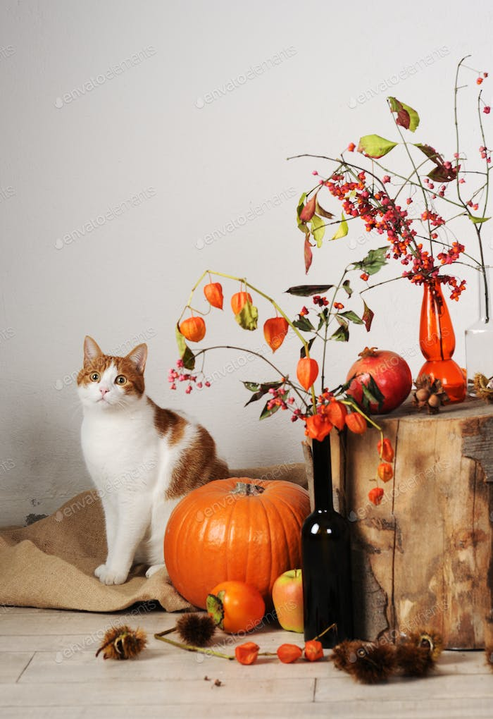 cat and autumnal composition