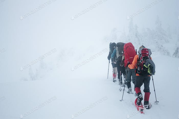 Climbers with backpacks walking in Gorgany mountains during blizzard