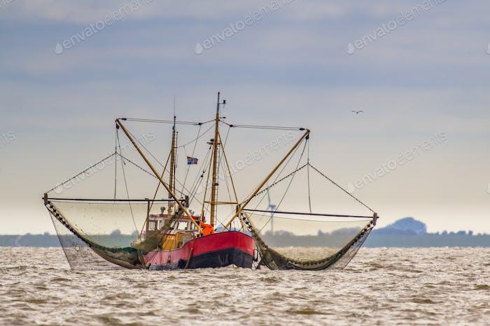 Shrimp fishing cutter ship on the Wadden sea