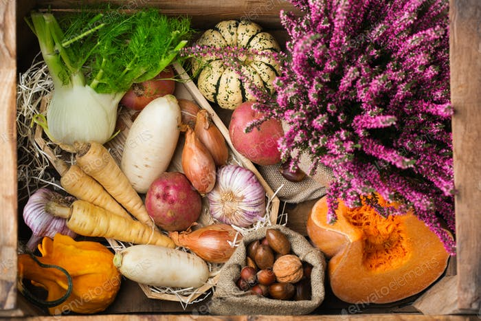 Assortment or farmer market bio organic ripe root vegetables