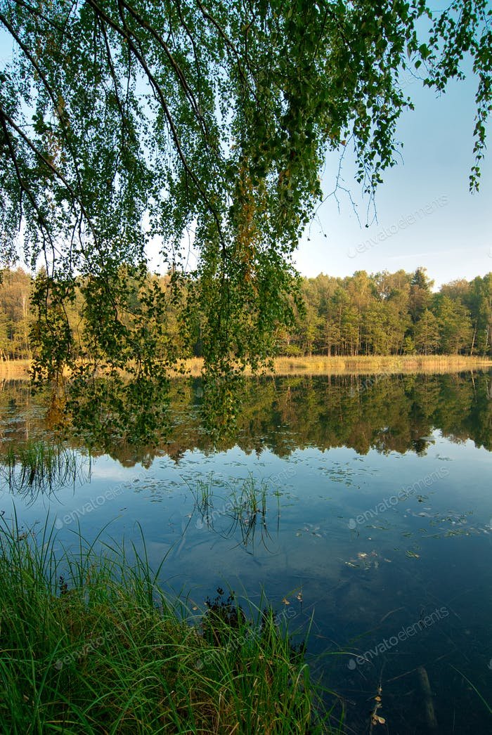 Landscape with a forest lake in summer