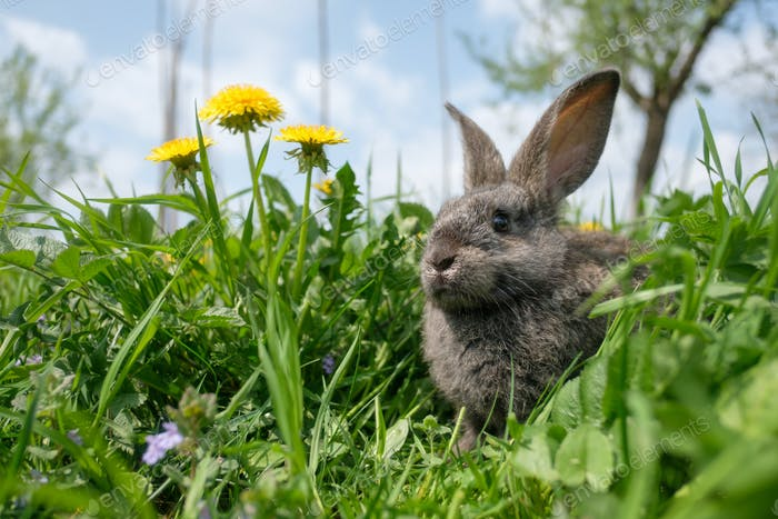 Small grey rabbit in green grass closeup
