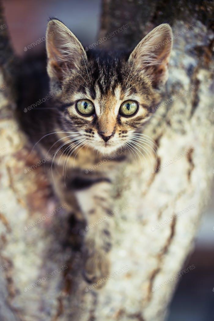 Kleines getigertes Kätzchen sitzt auf dem Baum