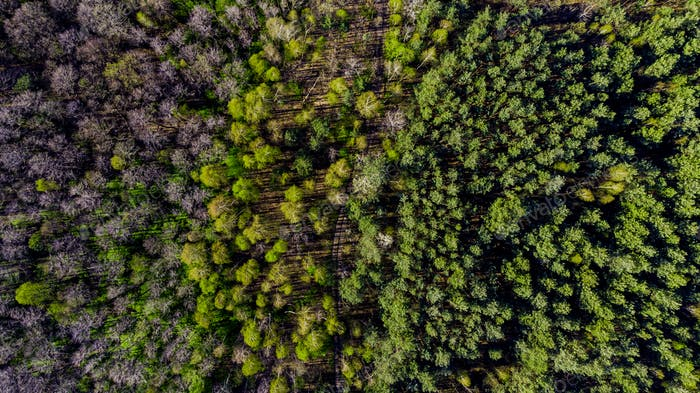 Drone Top Down View Over Forest At Spring