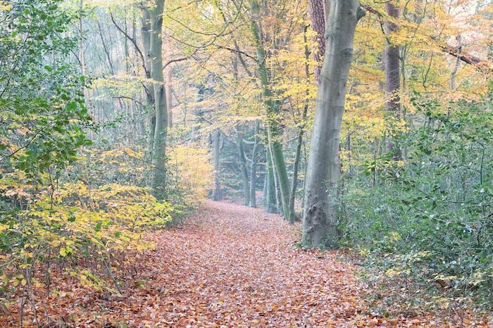 path in autumn orange uellow  forest
