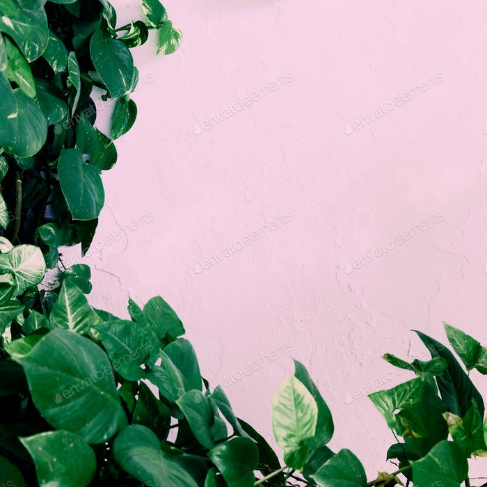Plant on pink. Stylish green minimal art