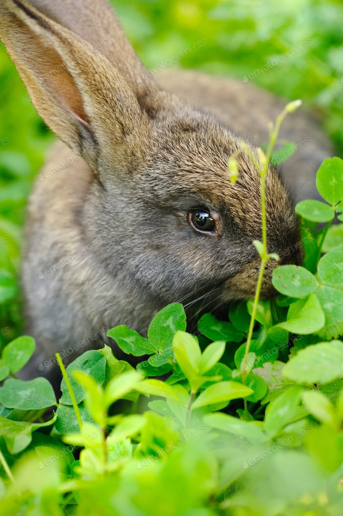 Funny baby gray rabbit in grass