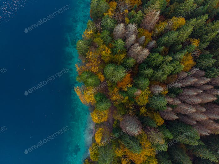 Colorful forest by lake side, aerial from above