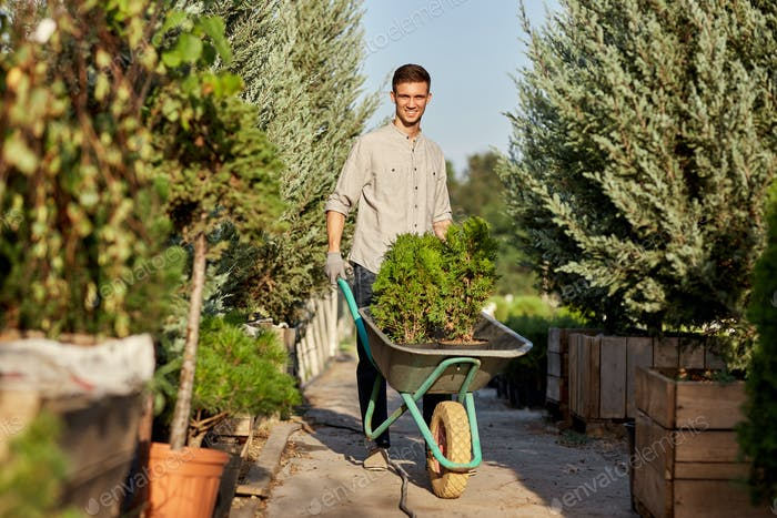 Guy gardener rolls a cart with seedlings in pots along the garden path in the wonderful nursery