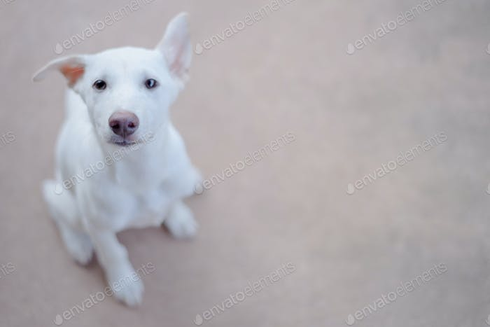 Poor white dog waiting for food