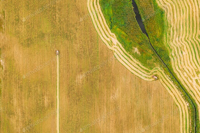 Aerial View Of Rural Landscape. Combine Harvester Working In Field, Collects Seeds. Harvesting Of
