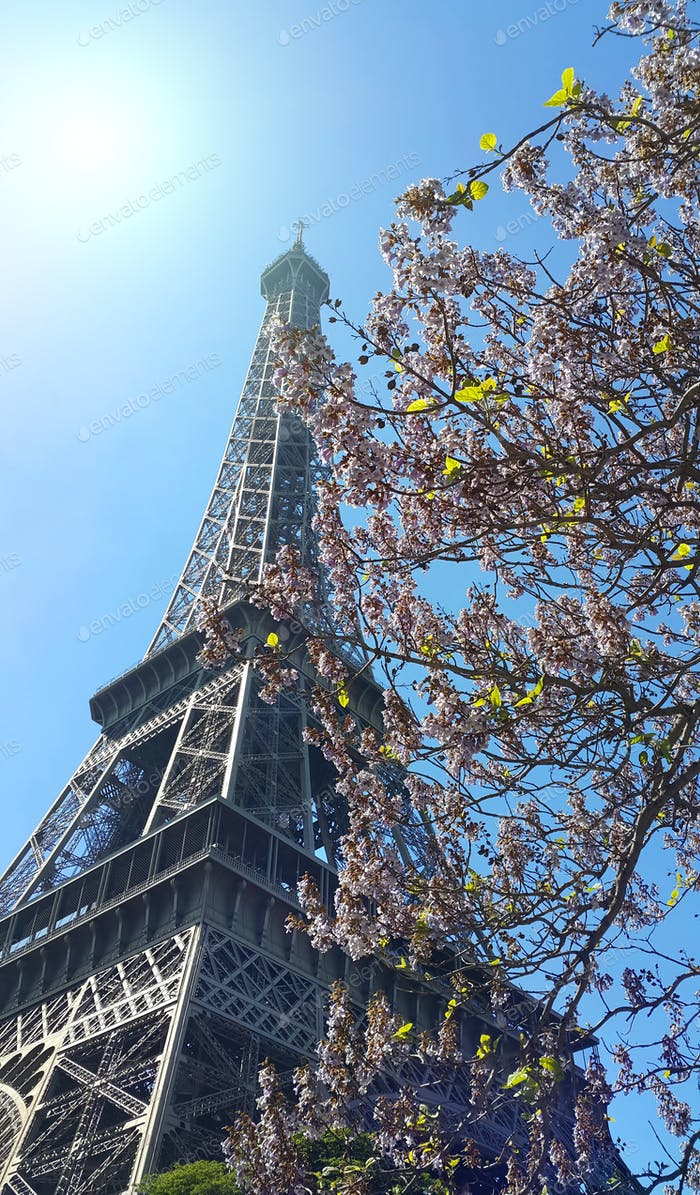Eiffel Tower on blue sky sunny background with beautiful bloomin
