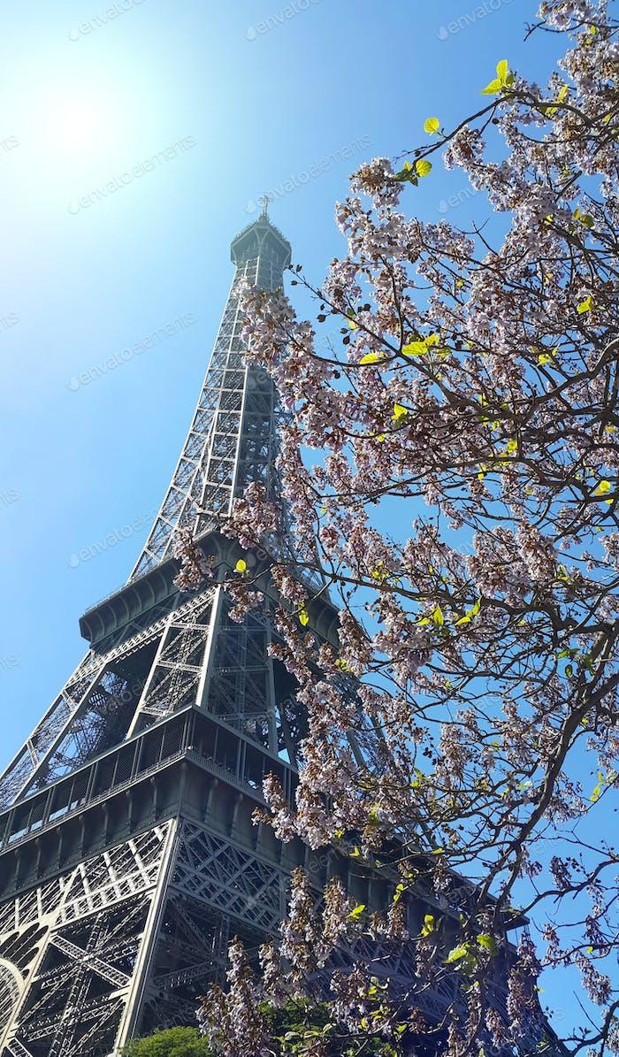 Eiffelturm auf blauem Himmel sonnigen Hintergrund mit schöner Blüte