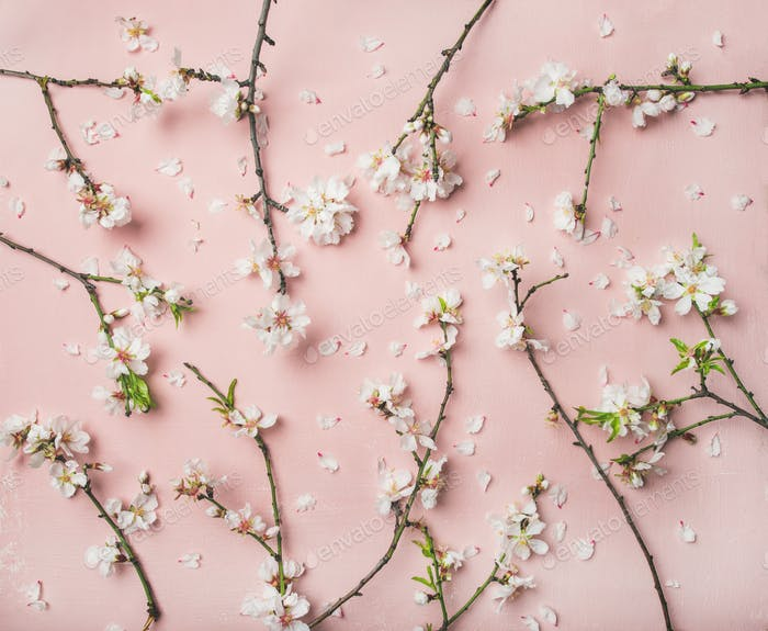 Spring almond blossom flowers over light pink background