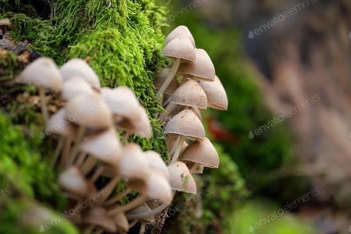 Las setas en el tronco