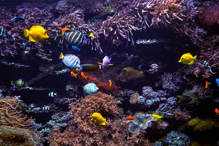 Wonderful and beautiful underwater world with corals and fish